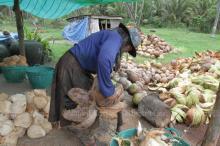 Orchid farmers wilt under labour law