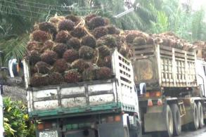 Biodiesel blends to soak up palm oil surplus, buoy prices