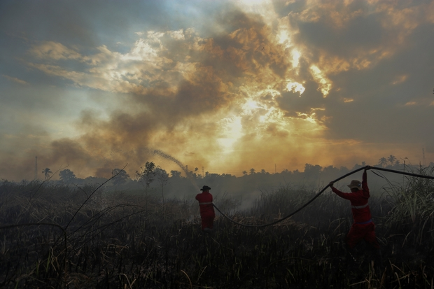 Forest burners 'will be shot', says Indonesian officer