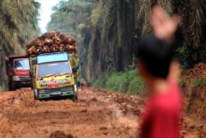 Indonesia palm oil plantations boost security to stop thieves