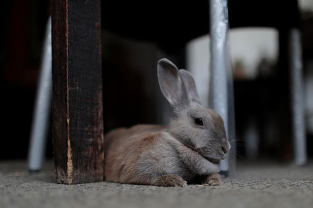 Venezuela urges citizens to eat rabbit to beat hunger