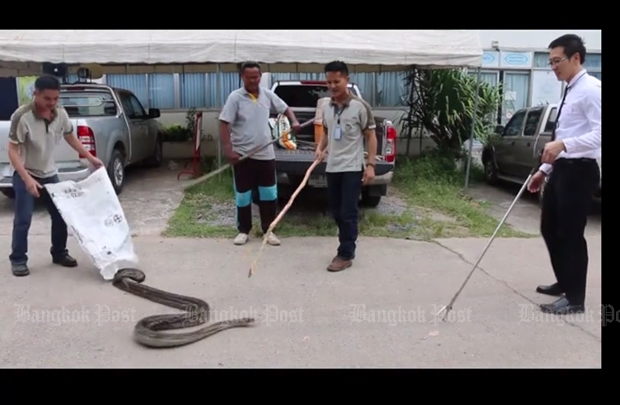 How to catch a snake