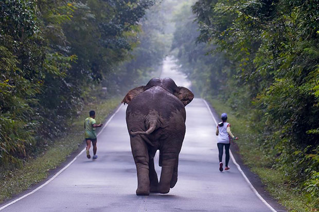 'Foolhardy' runners took selfies with wild elephant