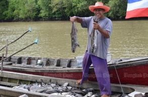 Freshwater flood kills basket sea fish in Trang