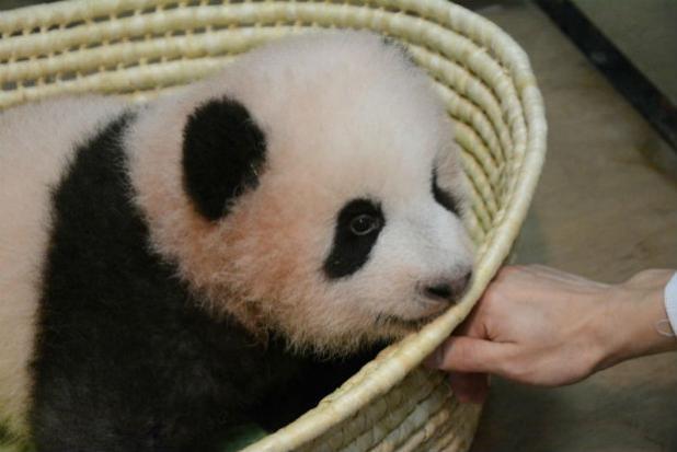 Giant panda cub born at Tokyo's Ueno zoo named
