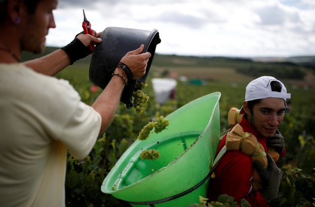 French wine output lowest in 60 years