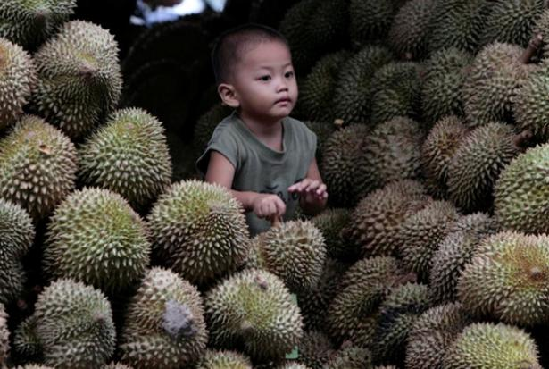 Scientists reveal origins of durian fruit's pungent aroma