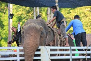 Rescued elephant being treated at conservation centre