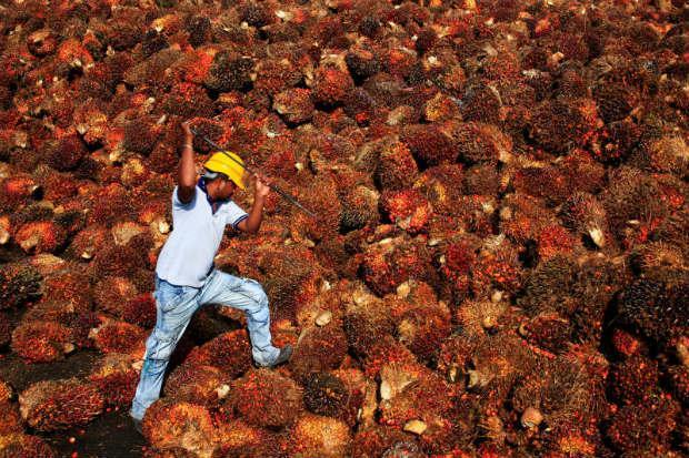 EU palm oil resolution 'will affect millions' | Bangkok Post: news