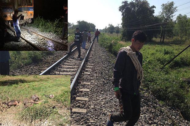 Rush for free meat after train hits buffalo herd   Bangkok Post: news