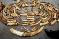 Zimbabwe seizes 200kg of ivory destined for Malaysia
