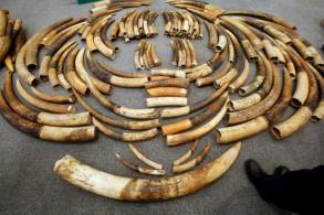 Zimbabwe seizes 200kg of ivory destined for Malaysia