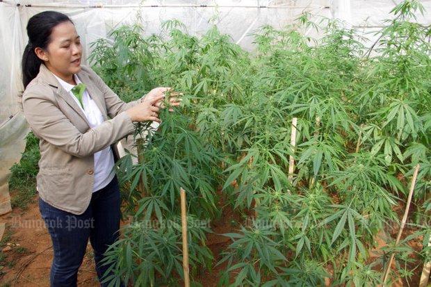 NSB backs growing marijuana for state medical research