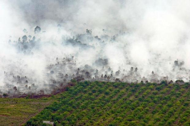 Indonesia mobilises to combat health-damaging forest fires | Bangkok Post: news