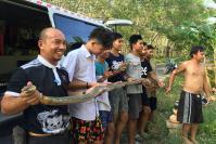 King cobra caught in Songkhla home