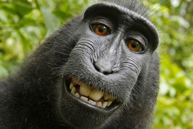 Monkey in 'selfie' cannot sue for copyright, US court says | Bangkok Post: news