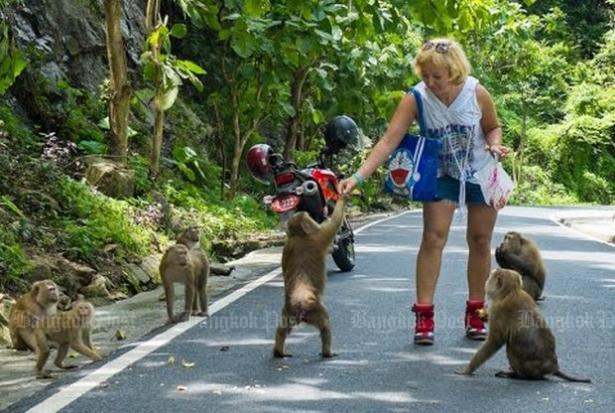 Public to decide fate of trouble-making monkeys