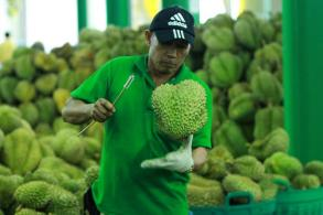 April exports soar, durian sales to China up 700%