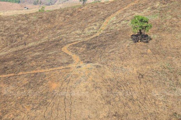 New laws chased to boost afforestation | Bangkok Post: news