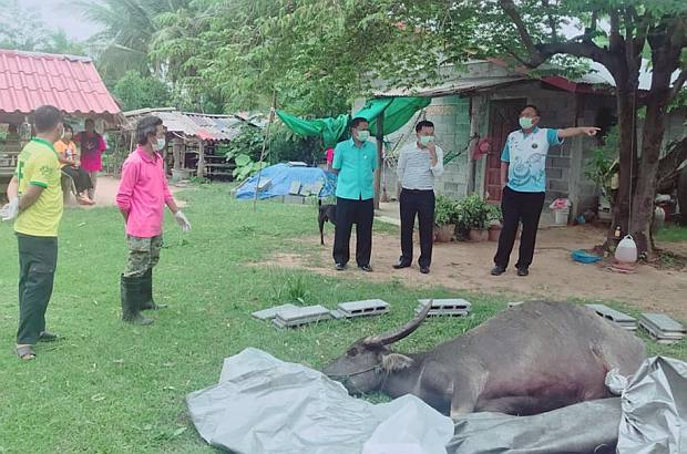 Villagers vaccinated after eating rabies-infected buffalo