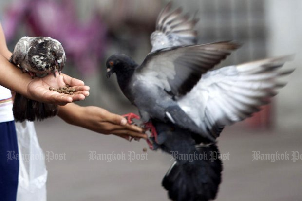 City Hall joins flap over pigeon-feeding