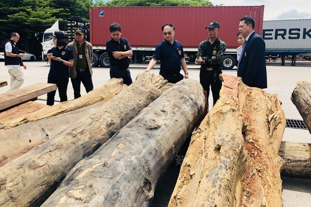 Damage from forest abuse hits B100 billion