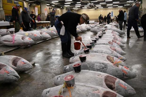 Haulage vehicles move to new Tokyo fish market