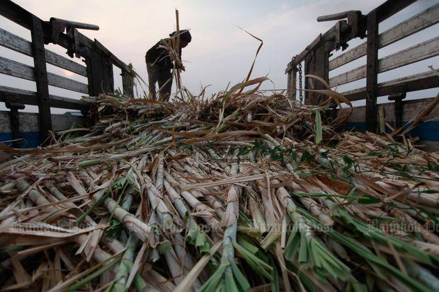 Sugar, sugarcane output set to fall -USDA | Bangkok Post: business