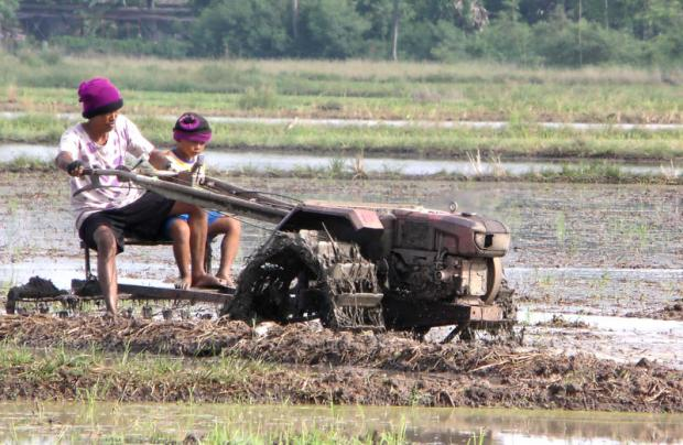 Hom mali rice production set to drop 10% on drought | Bangkok Post: business