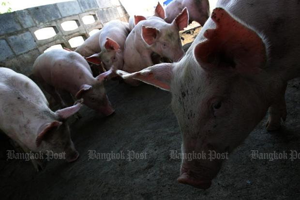 Deadly swine virus in China's Yunnan scares Asian neighbours | Bangkok Post: business