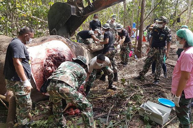 Elephant shot dead, armed man in military uniform seen nearby