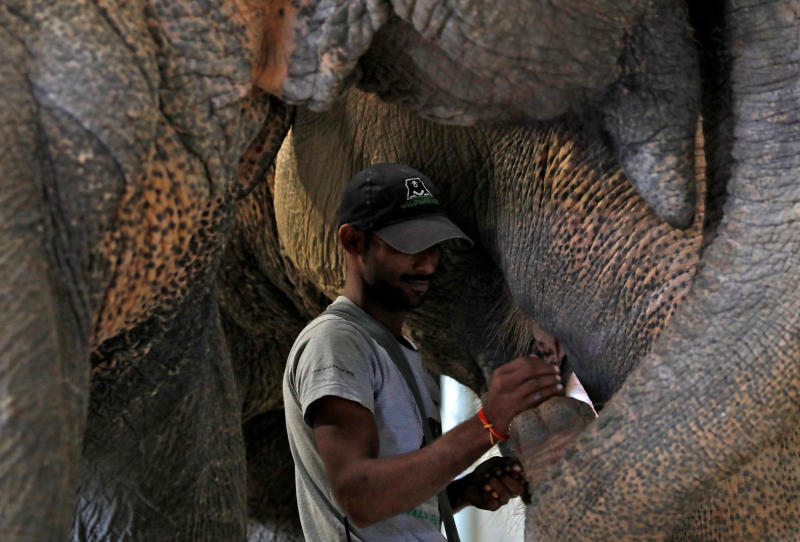 India's first elephant hospital cheers activists, draws tourists