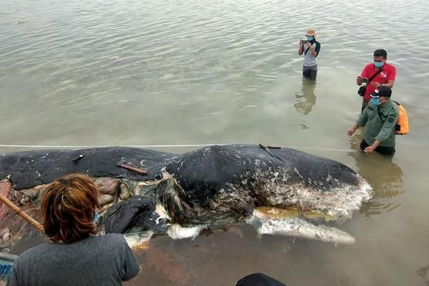 Sperm whale in Indonesia found with 1000 plastic pieces in stomach