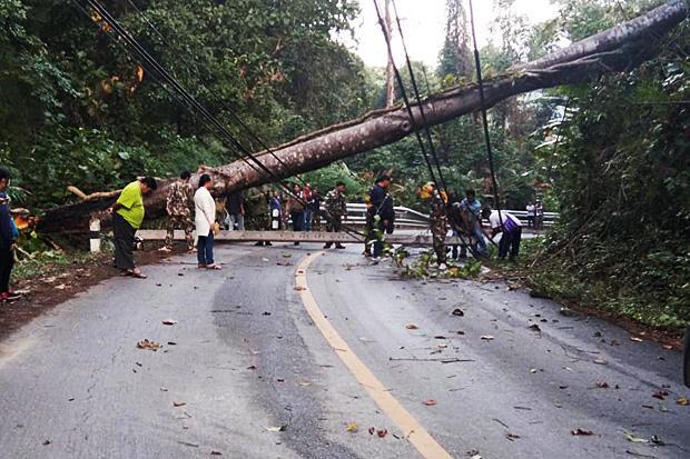 Huge tree falls onto Tak-Mae Hong Son highway, blocking