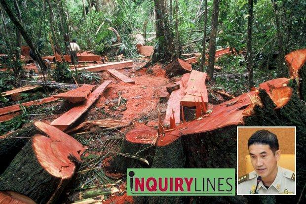 Fighting for our forests | Bangkok Post: news