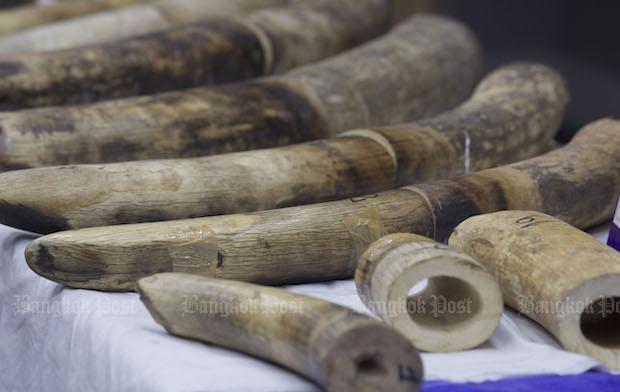 Cambodia seizes 3 tonnes of ivory | Bangkok Post: news