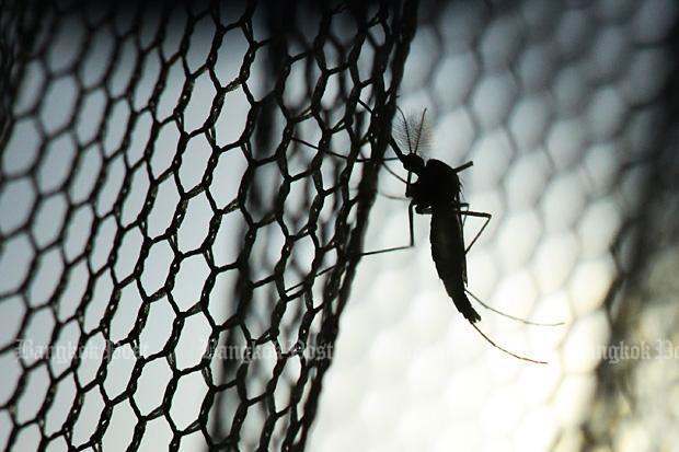Chikungunya virus infects 121 in Surin