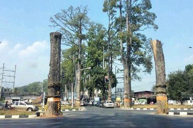 Preserve iconic 'yang na' trees | Bangkok Post: opinion