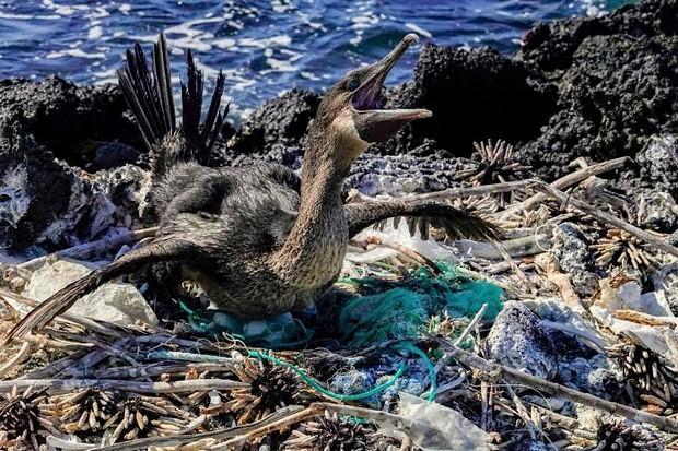 Plastic microparticles threaten unique Galapagos fauna | Bangkok Post: news