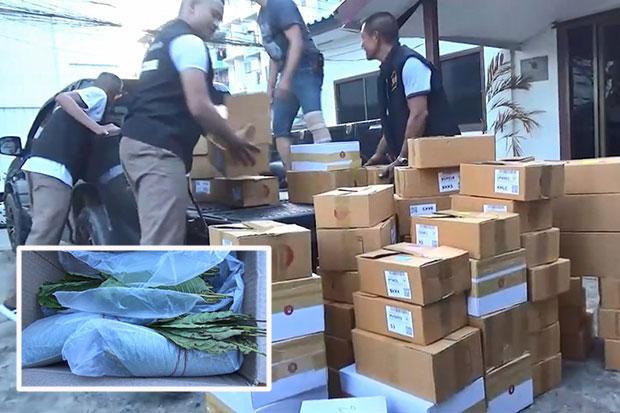 Parcels containing 183kg of kratom leaves seized | Bangkok Post: news