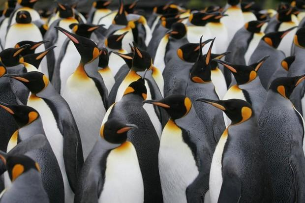 Antarctic penguins suffer 'catastrophic' breeding failure | Bangkok Post: news