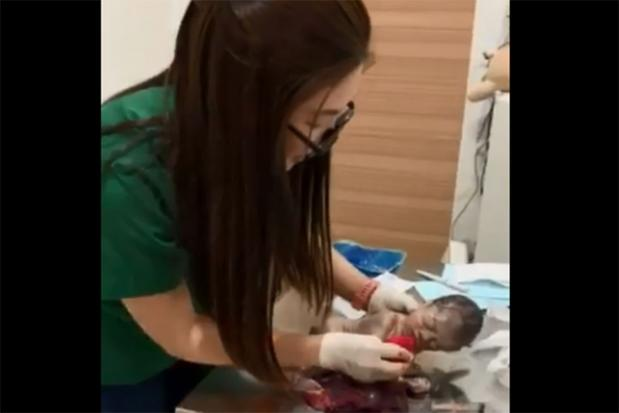 Veterinarian praised for saving baby's life