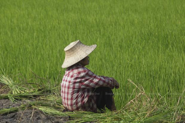 China's cheap rice threatens Thai exports | Bangkok Post: business