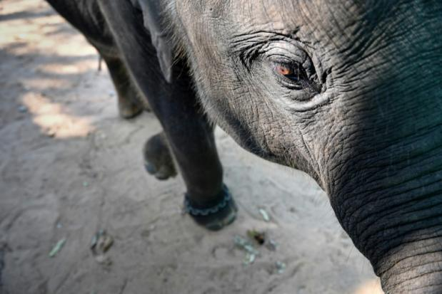 Video shows abuse of Thai baby elephant