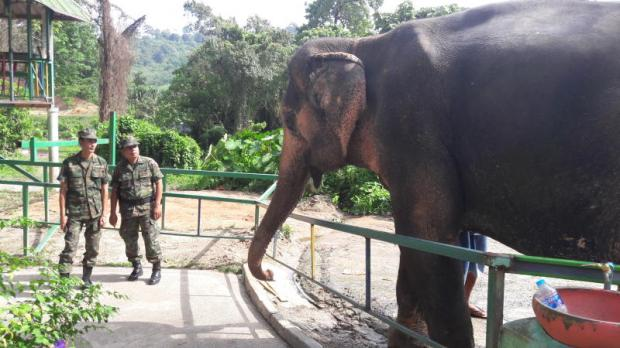 Elephant handler takes case to court