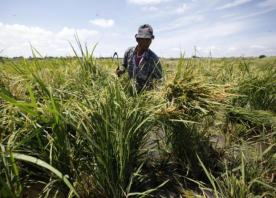 B2bn rice insurance scheme gets nod