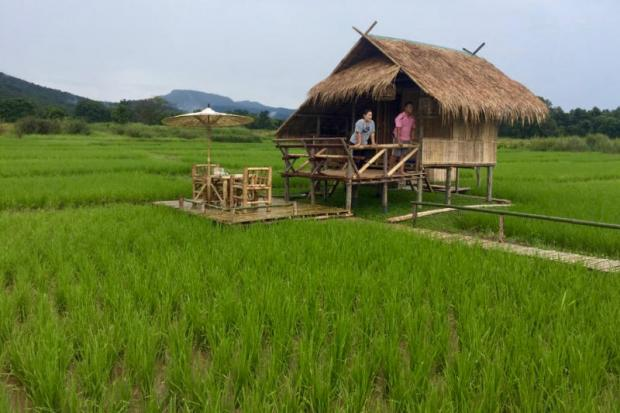 Army opens up rice field to visitors