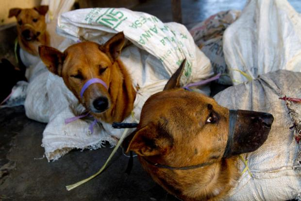 Paws up: Indonesia tackles the dog meat trade