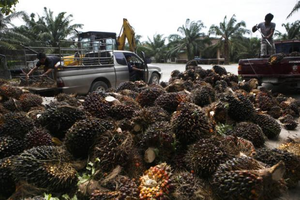 Surat Thani oil palm city proposal headed to cabinet