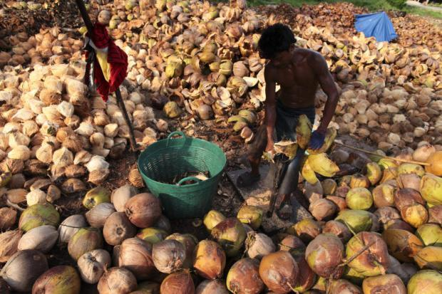 Coconut licences to be revoked | Bangkok Post: business